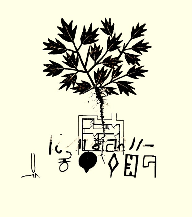 Drvo DavidFelix