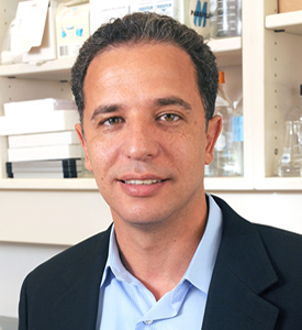 Scientists led by Dr. Hesham Sadek have demonstrated that the gene Meis1 regulates the regenerative capability of newborn hearts.