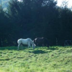 Vermont Horse Farm Daily Trending