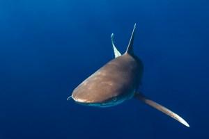 Shark Week-Ägypten 2012, 73 Fotos
