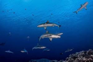 Französisch Poynesien 2014, 198 Fotos