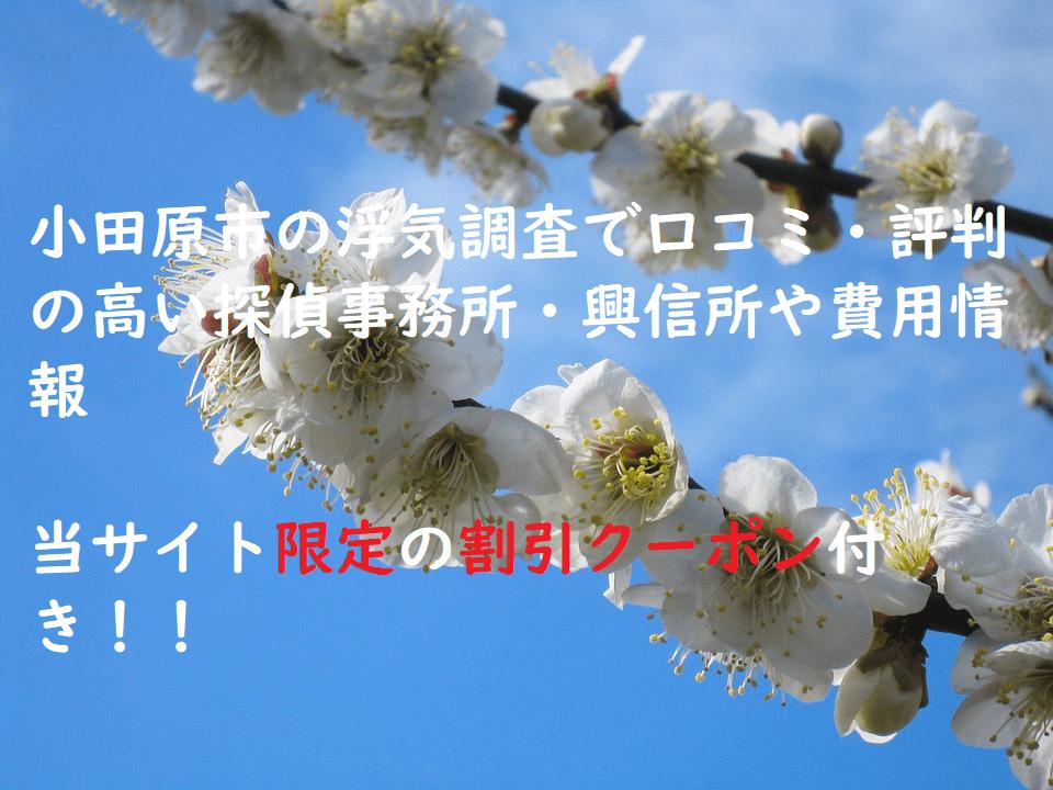 小田原市の浮気調査で口コミ・評判の高い探偵事務所・興信所や費用情報