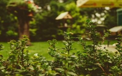 Bescherm bomen, bloemen en planten tegen dieren in de tuin