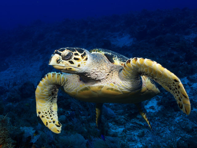Image result for sea life, underwater, photos