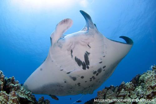 Reef Scuba Diving Great Barrier