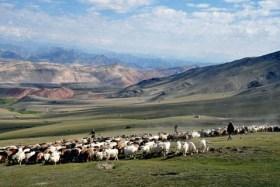 china-xinjiang-herdsmen-kizilsu-kirghiz-autonomous-prefecture-aug14-2016