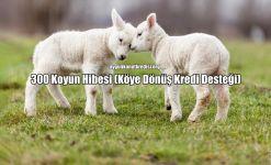 300 Koyun Hibesi (Köye Dönüş Kredi Desteği)
