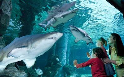 Andare in vacanza con i bambini a novembre, Acquario