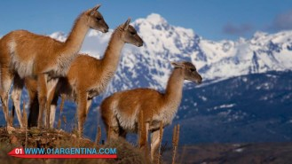 patagonia_06