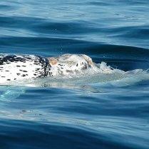 whales-patagonia-03