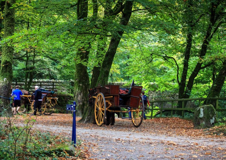 Jaunting Car tours for Kids