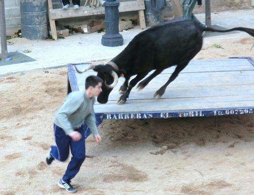 Quatre dies de toros a Xerta per Sant Martí
