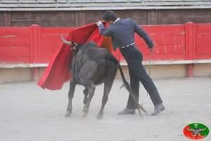 Imatges de l'actuació de Manuel de Reyes a Vergèze.