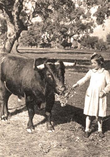 Recordando al toro Civilón