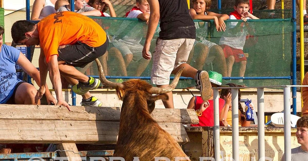 Set dies de toros a Santa Bàrbara (Tarragona)