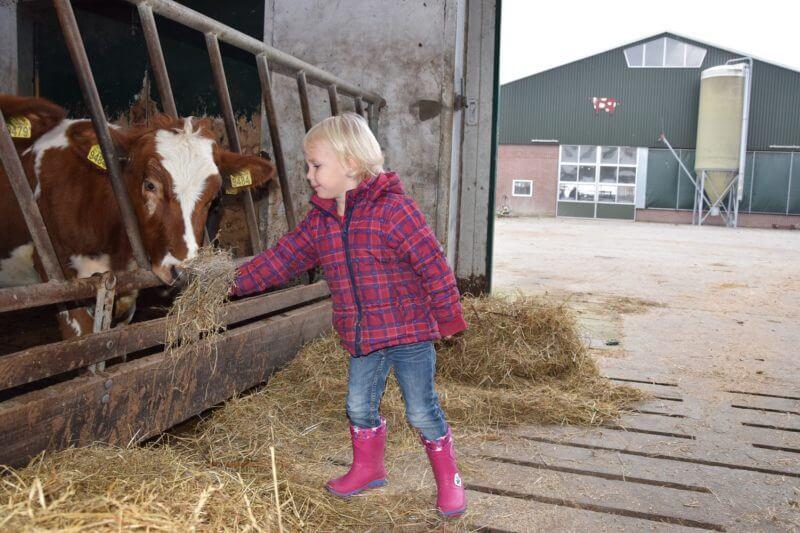 koeien-voeren-boertbert
