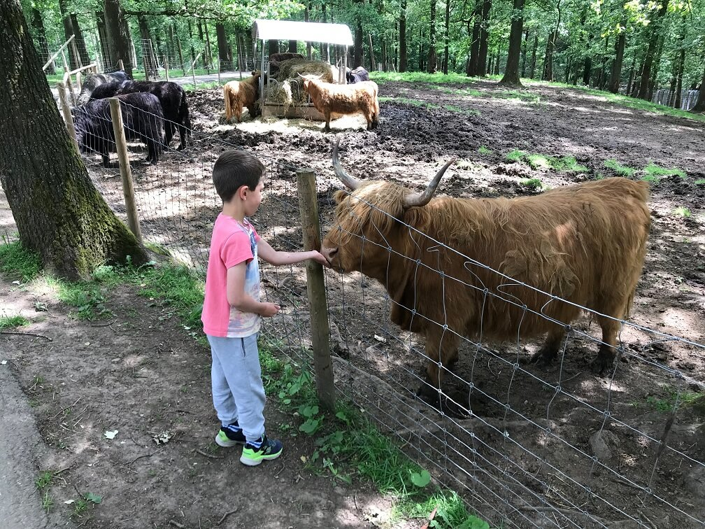 Dieren voeren in Forestia