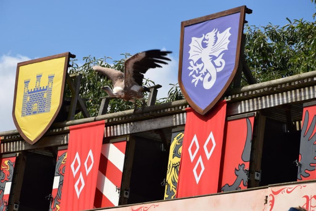 Roofvogels bij Le Bal des Oiseaux Fantômes in Puy du Fou