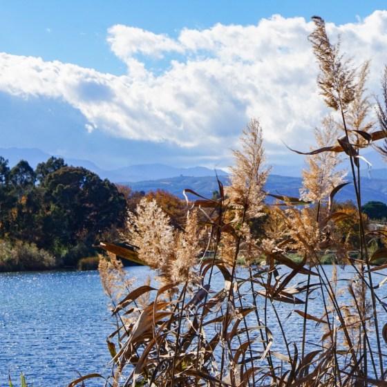 Agia-järvi