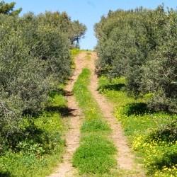 Kreetan kevät