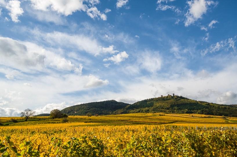 Das Elsass macht auch in Gelb...