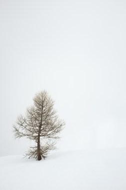 Weisse Einsamkeit