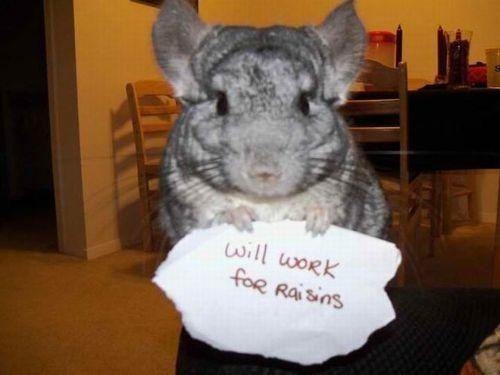 Will work for raisins!