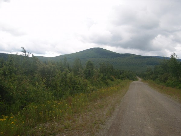 Backcountry of Maine full of moose