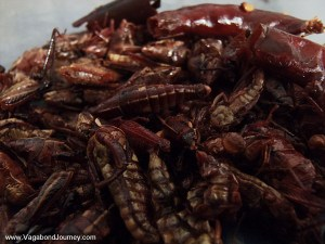 Grasshoppers Mexican food