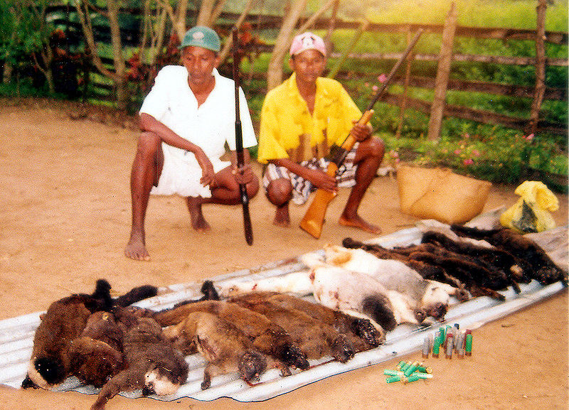 hunted-lemurs