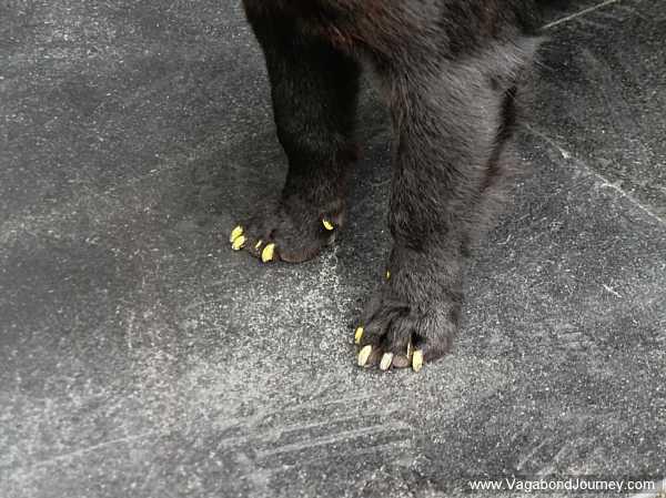 nail-polish-on-dog-china