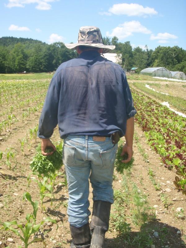 Salvadorean farm worker