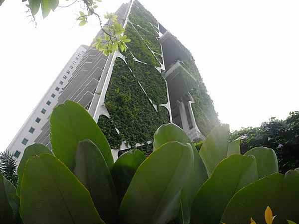 skyrise greenery singapore 6