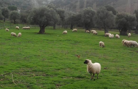 Gokceada Island – Turkey's Huge Organic Island