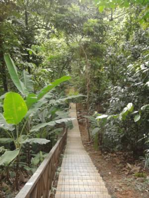 Malaysia, Bukit Nanas