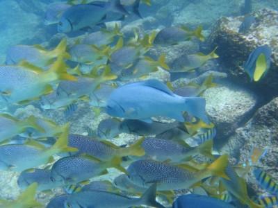 Underwater Galapagos