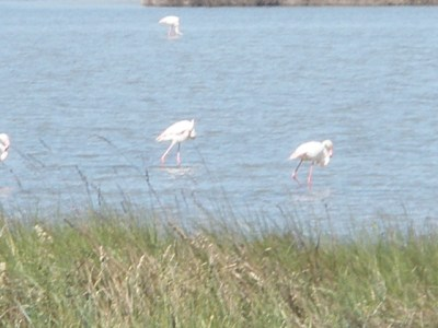 Seeing flamingos in the wild