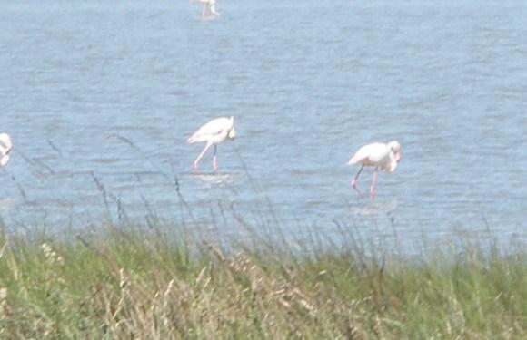 Photo Essay: Bird Watching on Italy's Po River