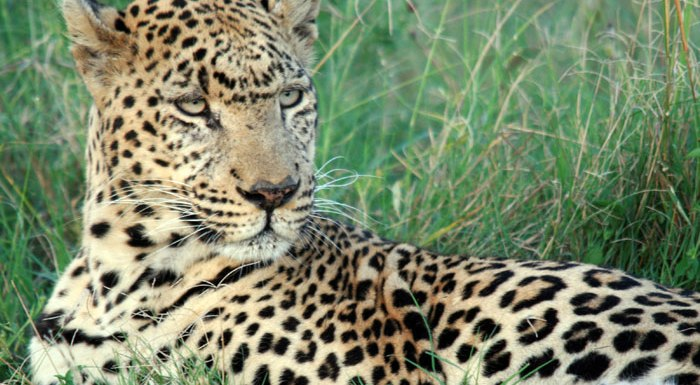 Win A Trip to Africa with Peregrine