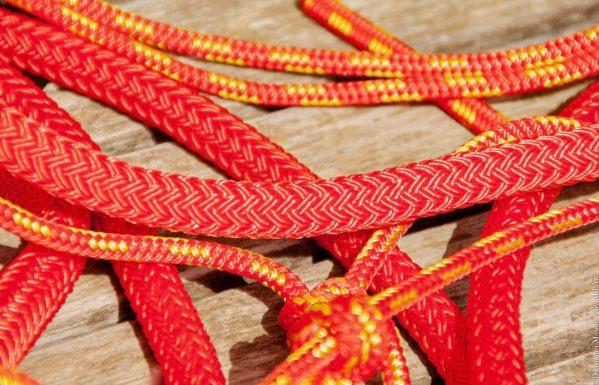 licol jaune et rouge et longe rouge