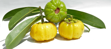Best Garcinia Cambogia Products