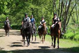 Vakantiehuis Dwingeloo Paardenvakantie (12)-s