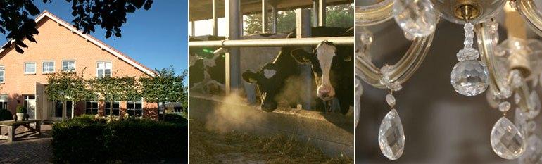 Tussen koe en krooluchter diessen