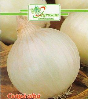 Seminte legume - Ceapa Alba White Queen