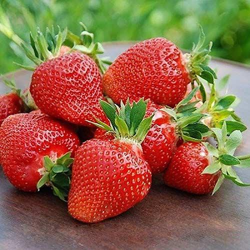 Căpșun