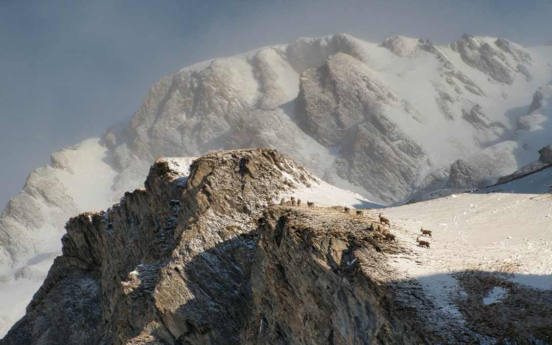 Mont Tapie 3014m