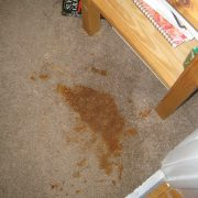 curry spill on brown rug