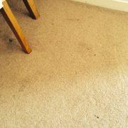 black spots on carpet