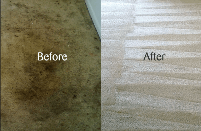 before and after carpet clean
