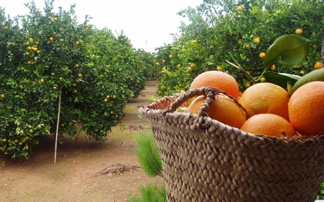 no beber zumo de naranja